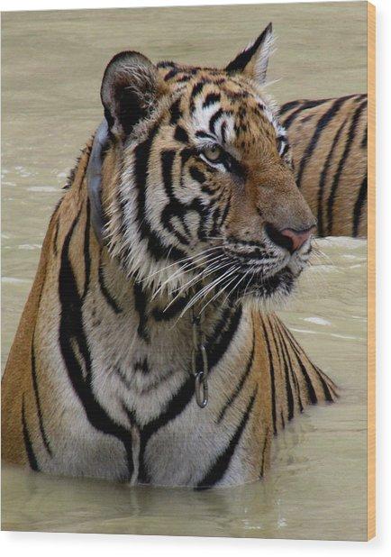 Tiger In Water Wood Print by Leena Kewlani