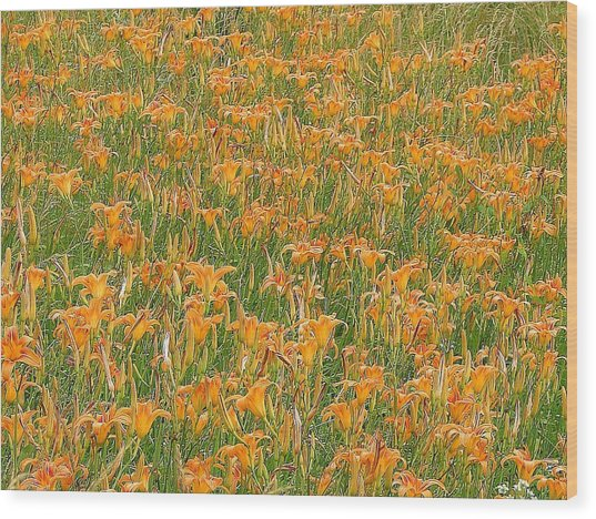 Tiger Lillies Wood Print by Luciana Seymour