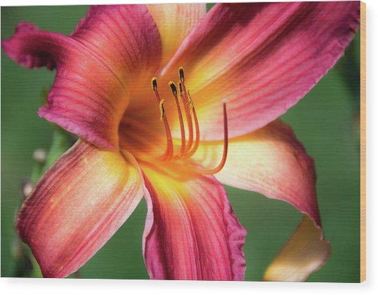 Tiger Lily Close Up Wood Print