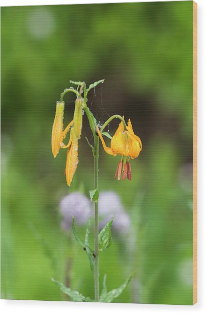 Tiger Lily In Olympic National Park Wood Print