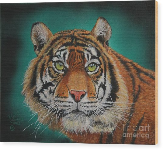 Tiger Portrait......amur Tiger Wood Print