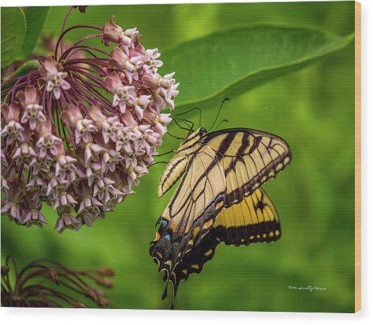 Tiger Swallowtail #210 Wood Print