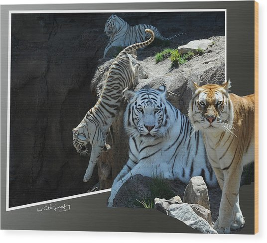 Tigers Out Of Frame Wood Print