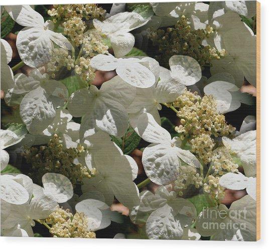Tiled White Lace Cap Hydrangeas Wood Print