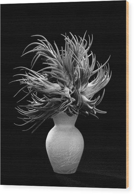 Tillandsia Wood Print by Gary Cloud