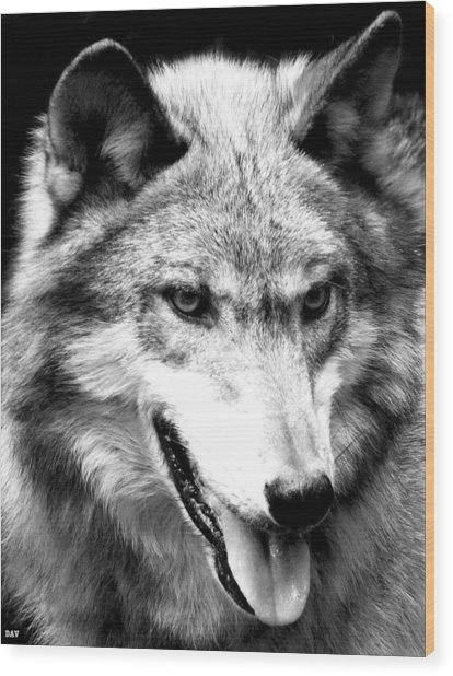 Timber Wolf Wood Print by Debra     Vatalaro