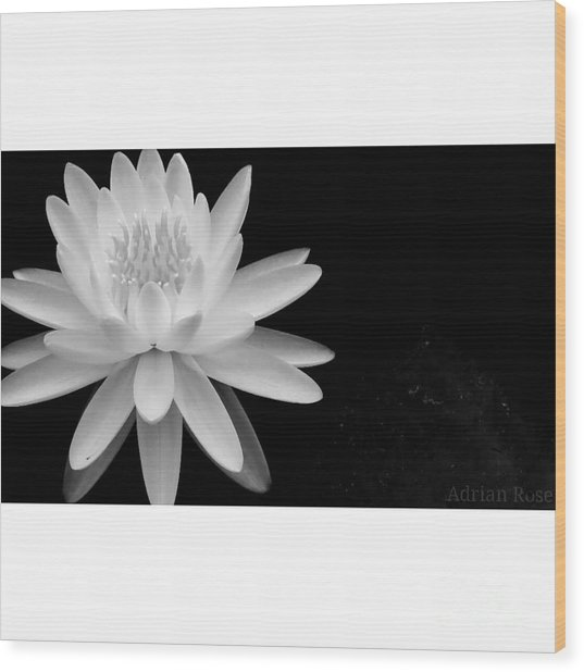 Black And White -timeless Lily Wood Print
