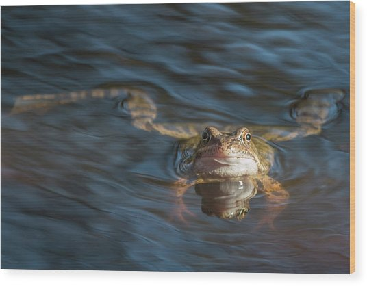 Timeout From The Annual Frog Ball Wood Print