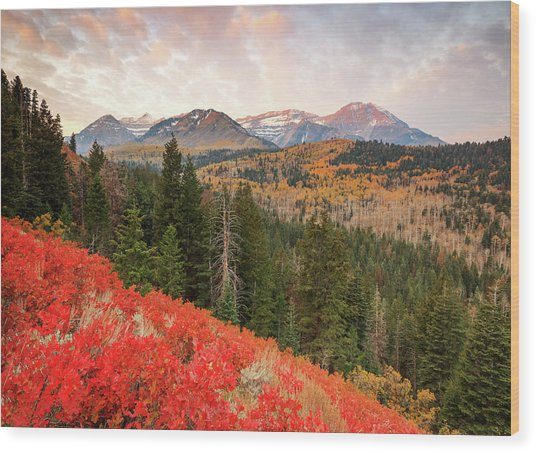 Timp With Red Oak Wood Print by Johnny Adolphson