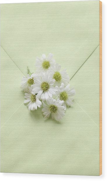 Tiny Daisies On Green Envelope Wood Print