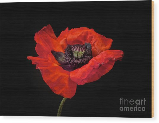 Tiny Dancer Poppy Wood Print by Toni Chanelle Paisley