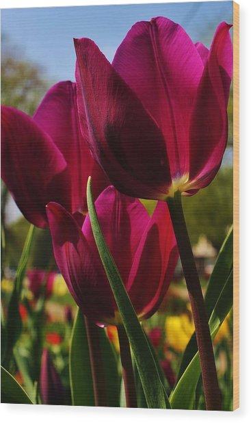 Tip Toe Through The Tulips Wood Print