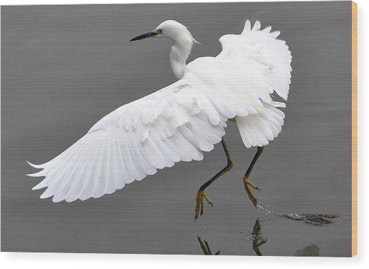Tiptoe Wood Print