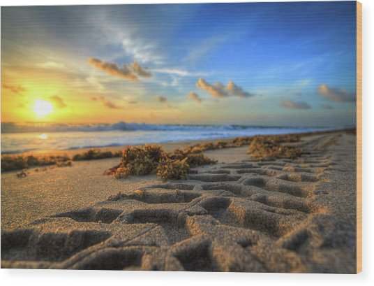 Tire Tracks In Sand Sunrise Wood Print