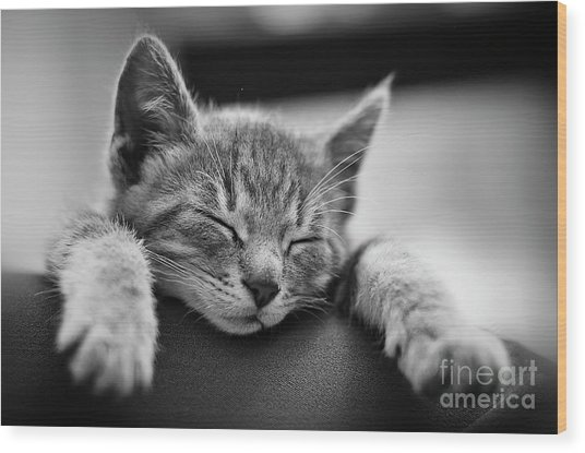 Tired .... So Tired Wood Print by Alessandro Giorgi Art Photography
