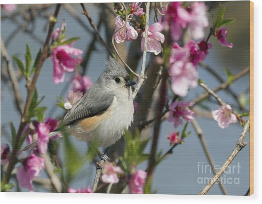 Titmouse And Peach Blossoms Wood Print