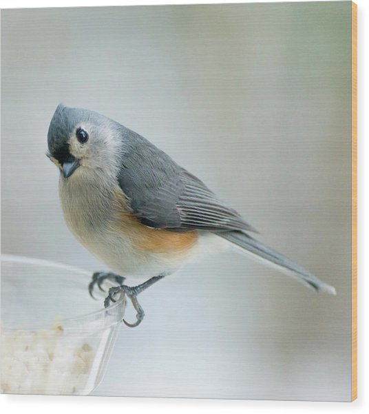 Titmouse With Walnuts Wood Print