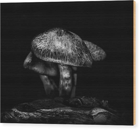 Toadstools On A Toronto Trail 1 Wood Print