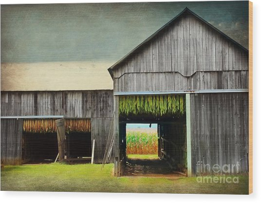 Tobacco Drying Wood Print