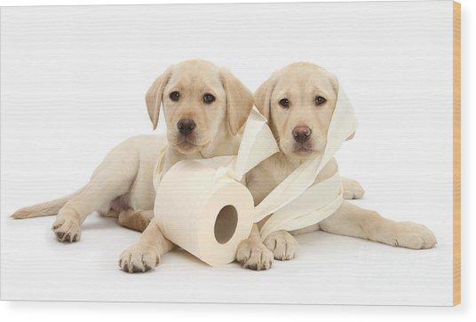 Toilet Humour Wood Print