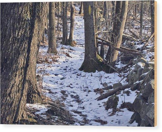 Tom Paul Trail Winter Wood Print