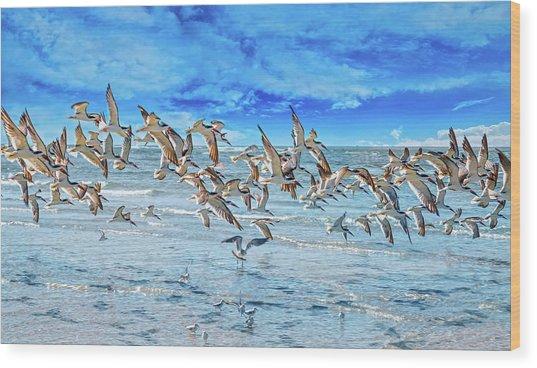Topsail Skimmers Wood Print