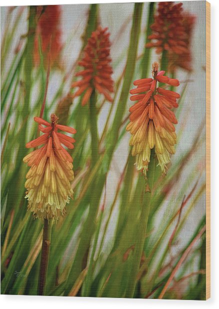 Torch Lily At The Beach Wood Print