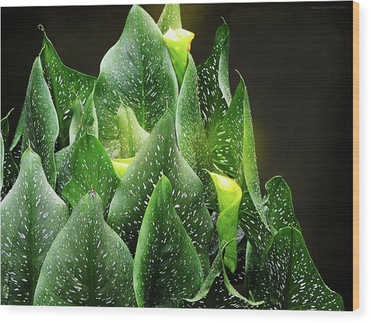 Torches - Calla Lilies Wood Print by Michael Taggart II