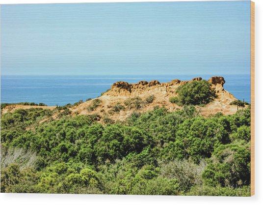 Torrey Pines California - Chaparral On The Coastal Cliffs Wood Print