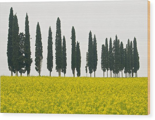 Toscana Cypresses Wood Print by Igor Voljch