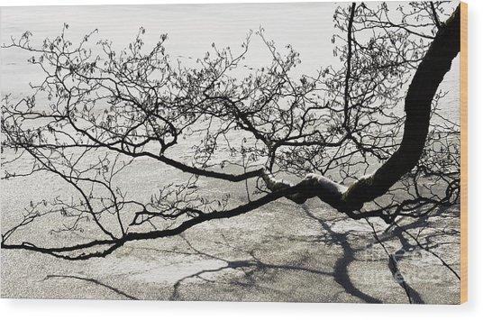 Wonderful Tree Wood Print
