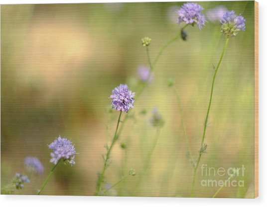 Touch Of Lavender Light Wood Print