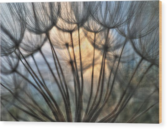 Touch Of Light Wood Print by Iris Greenwell