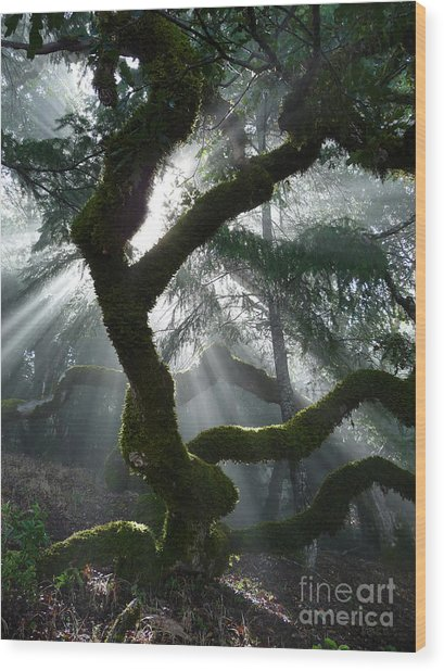 Touched By A Miracle Wood Print by JoAnn SkyWatcher