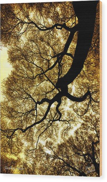 Touching Heaven Wood Print by Diane C Nicholson
