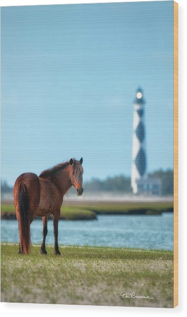 Tour Guide Cape Lookout 3509 Wood Print