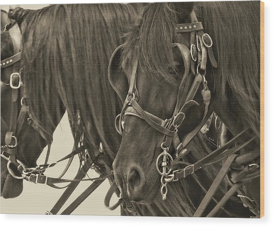 Tour Lexington Pair Wood Print by JAMART Photography