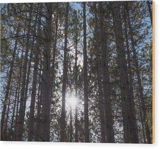 Towering Pines Wood Print