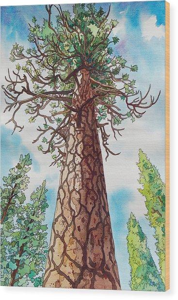 Towering Ponderosa Pine Wood Print