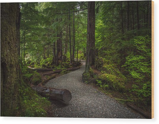 Trail Around Ward Lake Ketchikan Alaska Wood Print