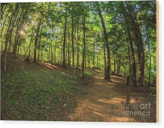Trail To John Oliver Cabin Wood Print