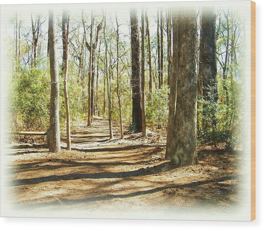 Trail Walk Wood Print by Nereida Slesarchik Cedeno Wilcoxon