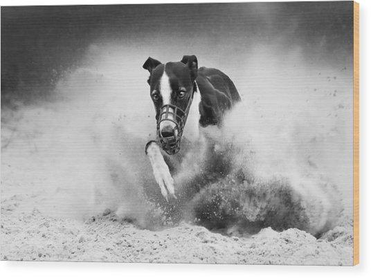 Training Greyhound Racing Wood Print