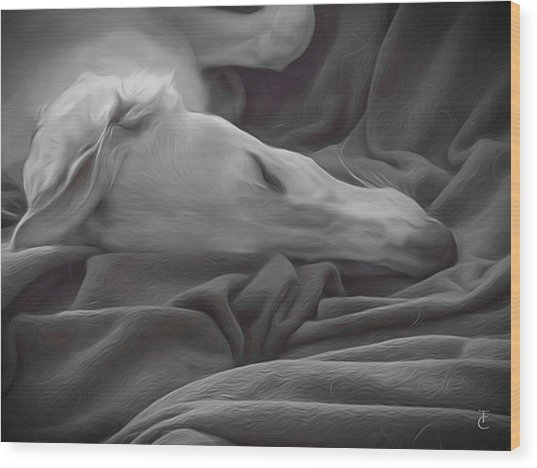 Tranquility Wood Print by Tamara Carey