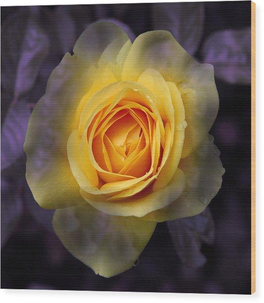 Transitional Rose Wood Print