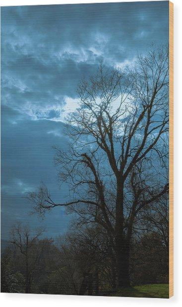 Tree # 23 Wood Print