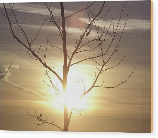 Tree And Sun Wood Print by Richard Mitchell