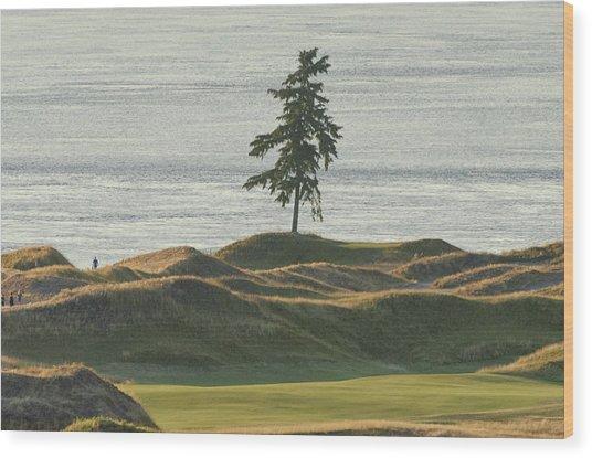 Tree At Chambers Bay Wood Print