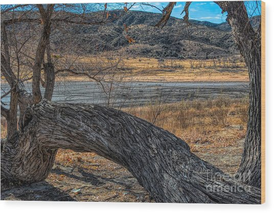 Tree At Elizabeth Lake Wood Print