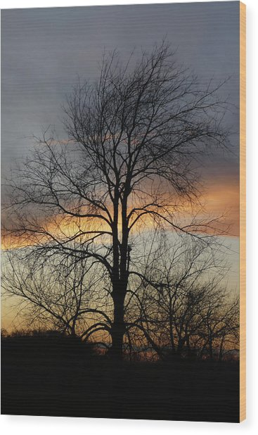 Tree At Sunset Wood Print by Jerry Weinstein